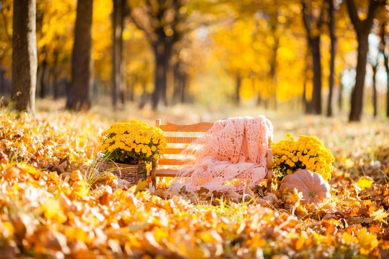 有橙色围巾的与黄色菊花的商店和花盆在秋天 免版税库存图片