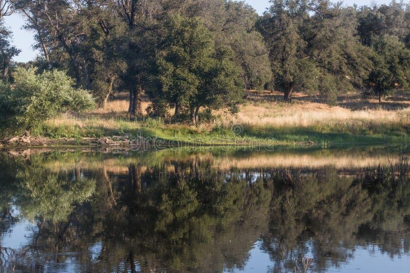 有橡树的风景池塘在南加利福尼亚山的安静,平静,大海反射了 免版税图库摄影