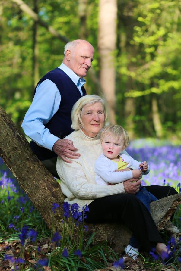有步行在森林里的孙的祖父母 库存图片
