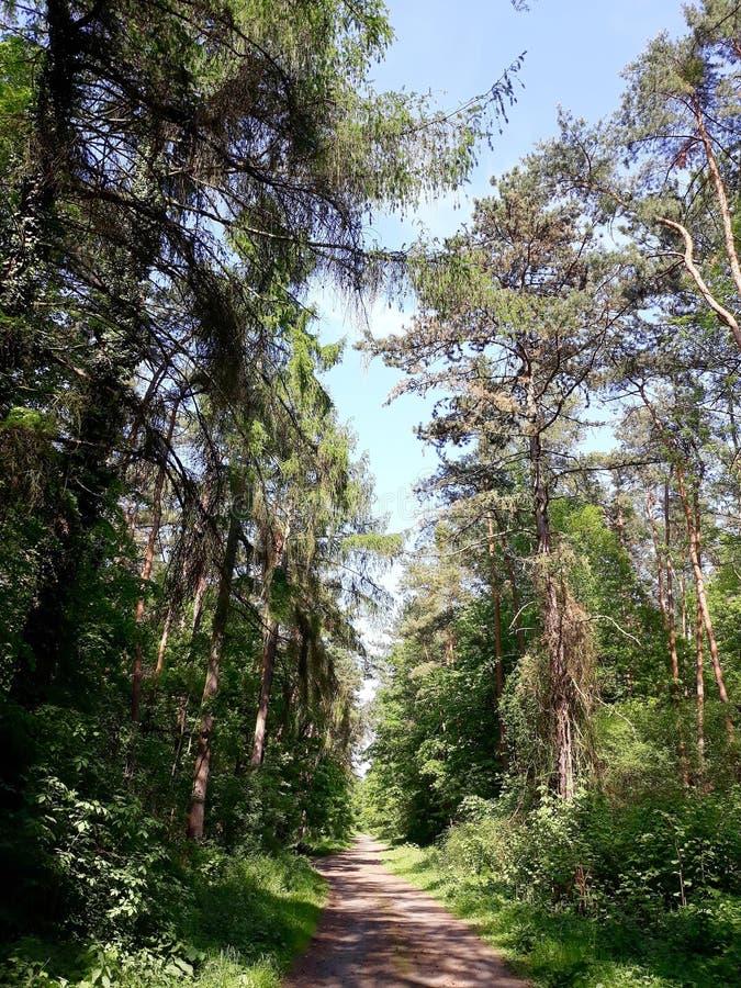 有步行道路的夏天森林 免版税库存照片