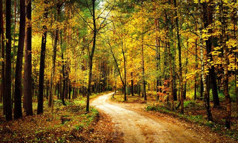 有步行道路的金黄秋天森林 有黄色树的风景五颜六色的森林 秋天 风景自然 免版税库存照片