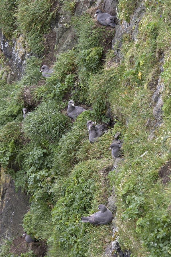 有殖民地o铜海岛的陡峭的岩石 免版税库存照片