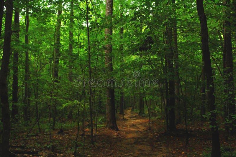 有段落的自然森林 图库摄影