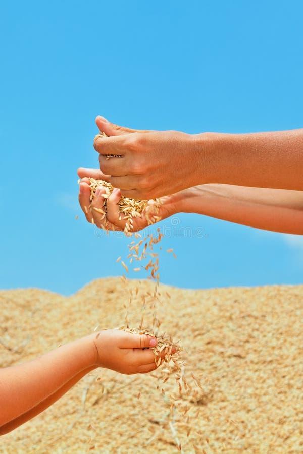 有母亲的愉快的孩子米粮食作物堆的  免版税库存图片