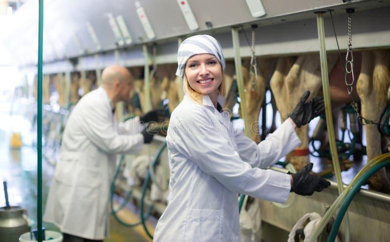 有母牛挤奶机的农厂职员 免版税图库摄影