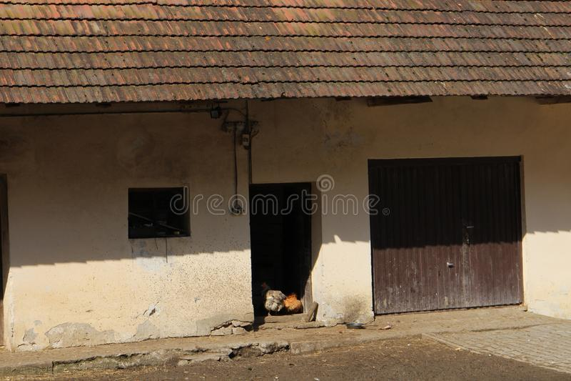 有母鸡的农场在Myjava附近的高地 免版税库存图片
