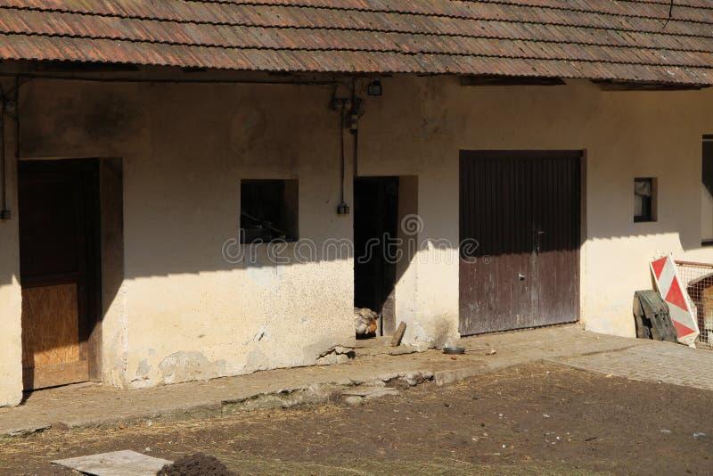 有母鸡的农场在Myjava附近的高地 库存照片