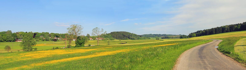 有毛茛和国家车道的,德国沼泽地 图库摄影