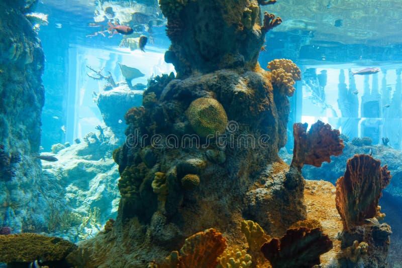 有水下的非洲动物和植物群的水族馆 库存图片