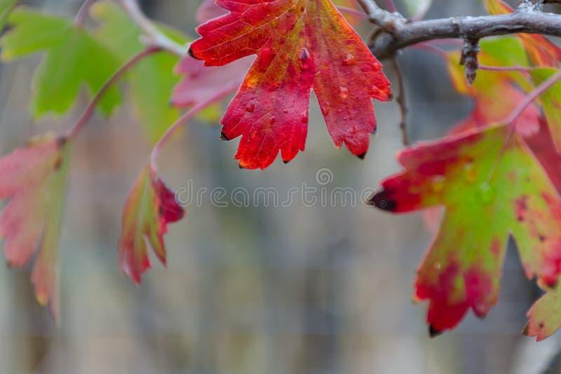 有水下落的明亮的秋天叶子 免版税库存照片
