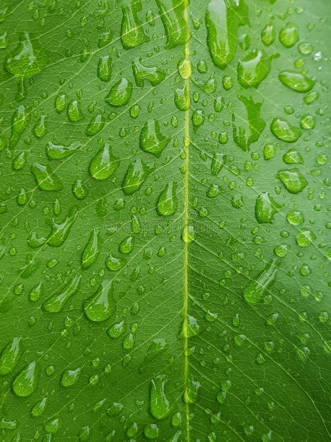 有水下落的绿色叶子接近背景 库存照片