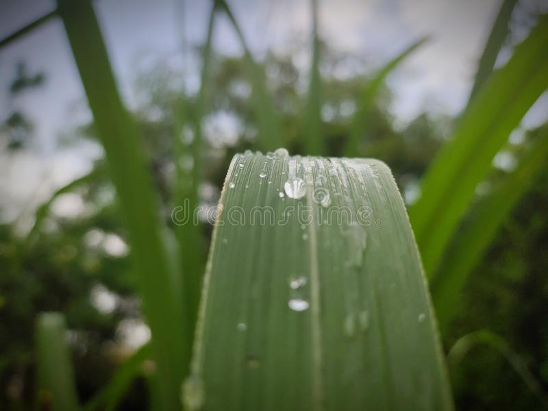 有水下落的绿色叶子 库存图片