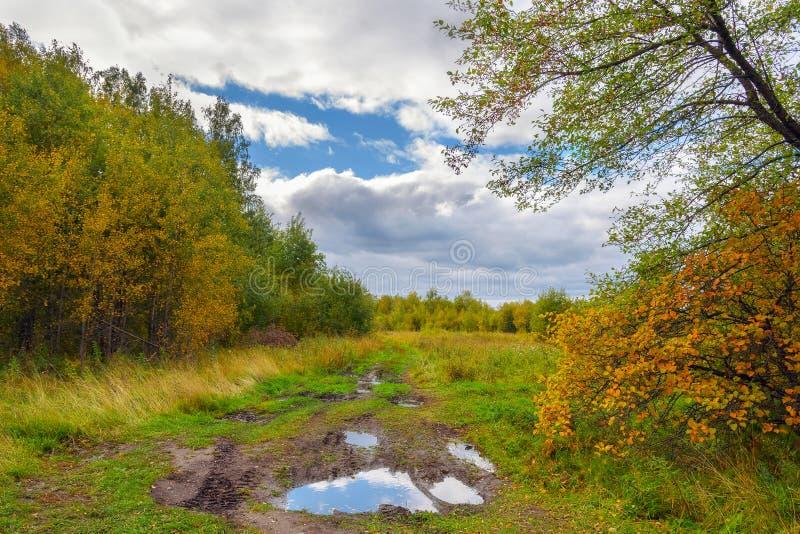 有水坑的农村泥路通过作为秋天Landsc的秋天森林 免版税图库摄影