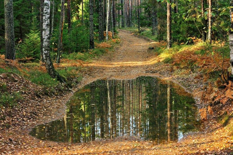 有水坑的老土壤路在森林里 免版税库存图片