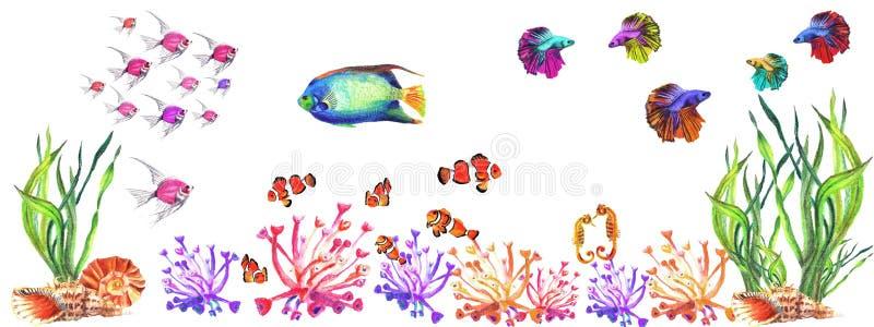 有水植物、珊瑚、鱼和壳的水彩水族馆 库存例证