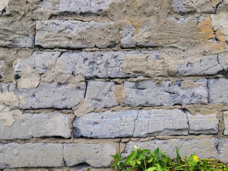 有水泥的砖老墙壁有绿色植物和白花背景 库存图片