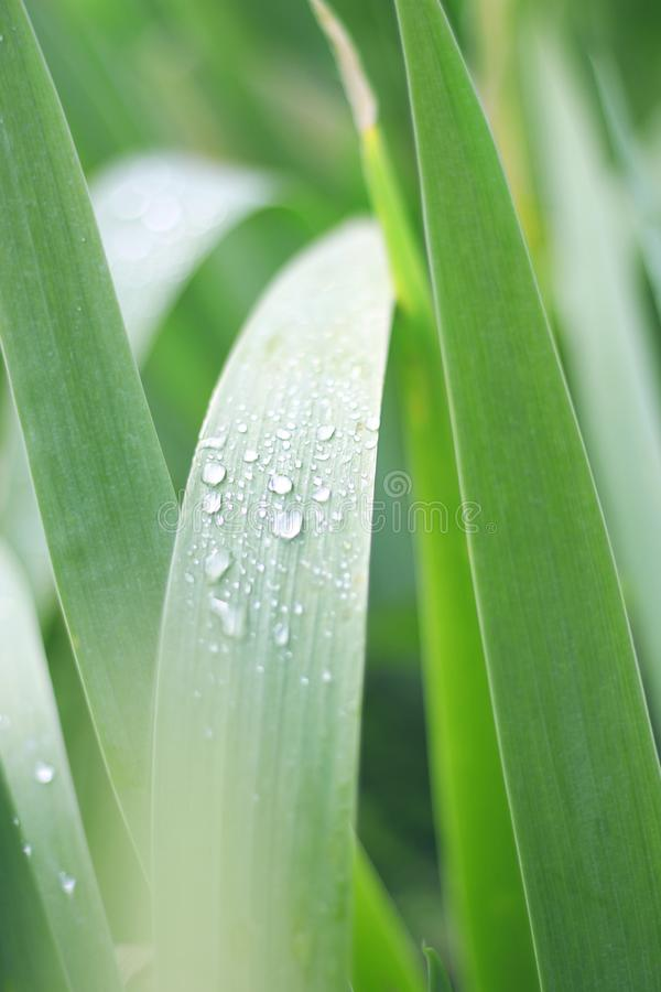 有水滴的绿色植物  库存照片