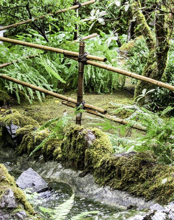 有水赛跑的竹庭院 免版税图库摄影