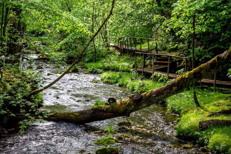 有河、下落的树和桥梁的森林 库存图片