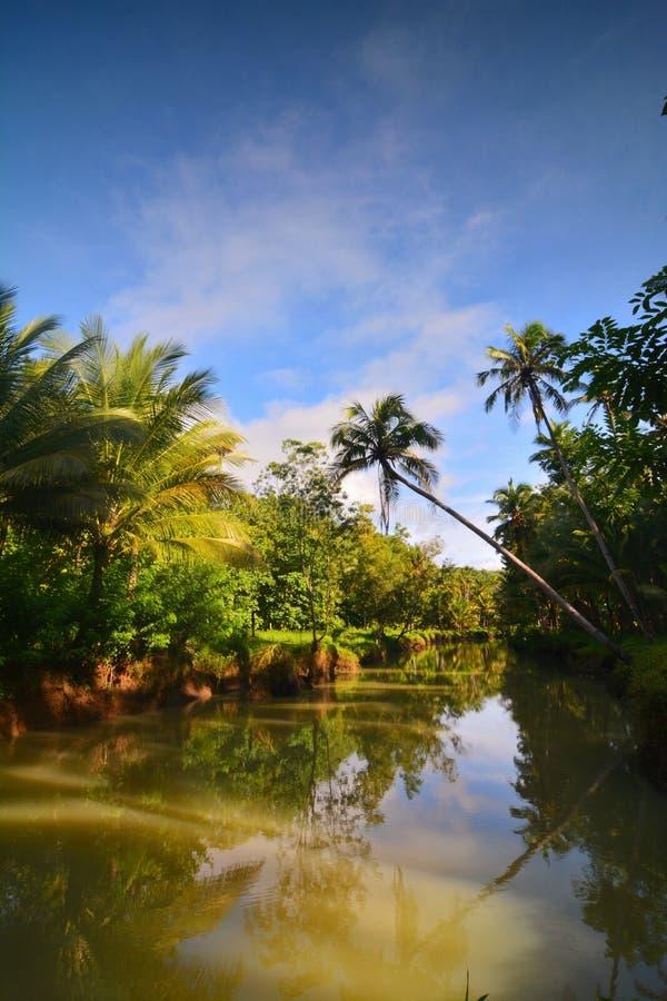 有河和天空蔚蓝的椰子 库存照片