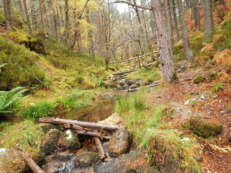 有河和石头的秋天森林 图库摄影