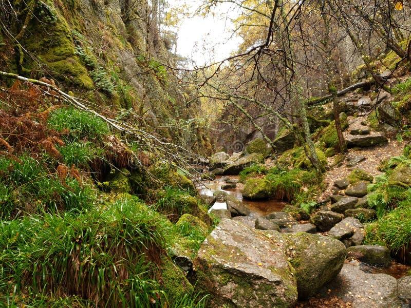 有河和石头的秋天森林 免版税图库摄影