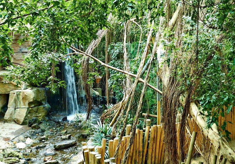 有河的热带密林 免版税库存照片