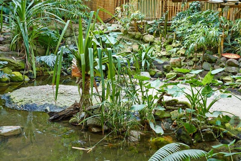 有河的热带密林 库存照片