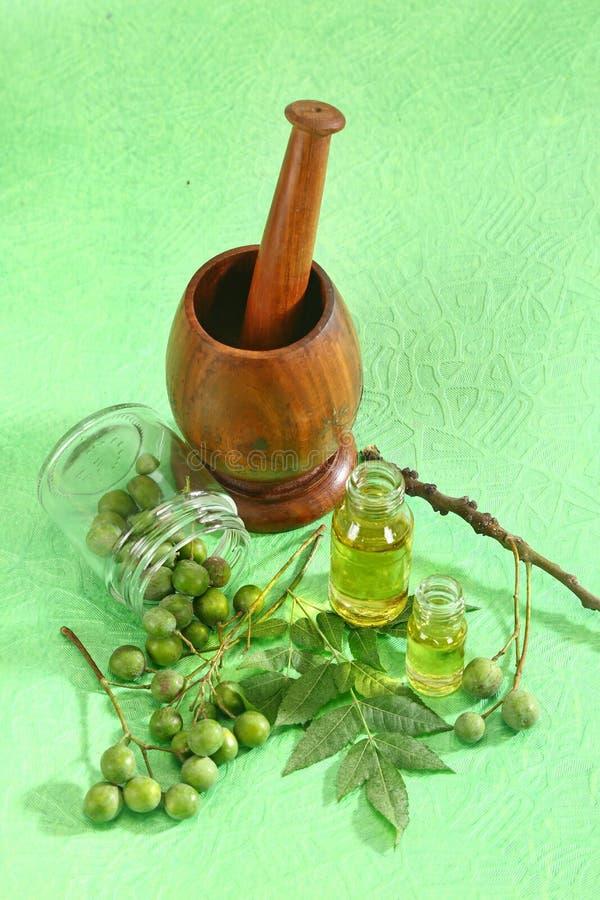 有油的新鲜的Neem叶子 库存照片