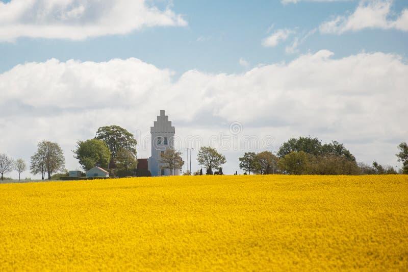 有油菜籽的领域的一个白色教会在前景的 图库摄影