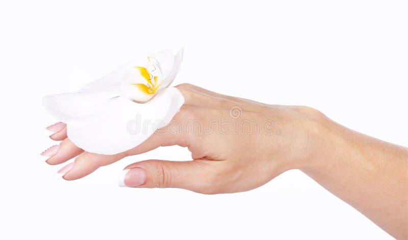 有法式修剪的美好的女性手和白色兰花开花 免版税库存图片