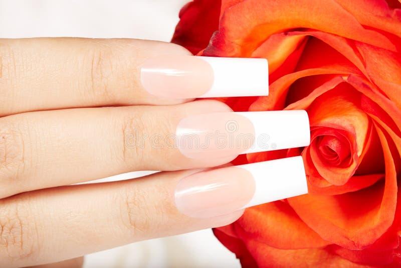 有法语的手指修剪钉子和红色玫瑰花 免版税库存照片