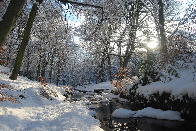 有流的冬天森林 库存照片