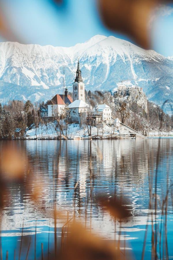 有流血的海岛和城堡的布莱德湖在日出在冬天,斯洛文尼亚 免版税库存图片