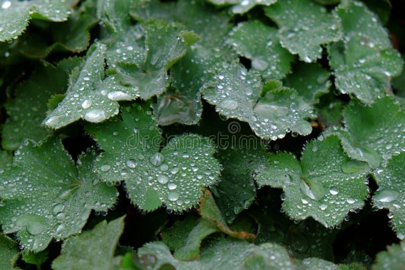 有浪花的绿色叶子 免版税库存照片