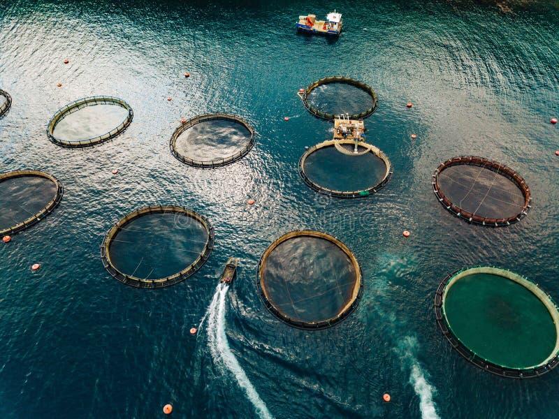 有浮动笼子的三文鱼渔场 鸟瞰图 免版税库存照片