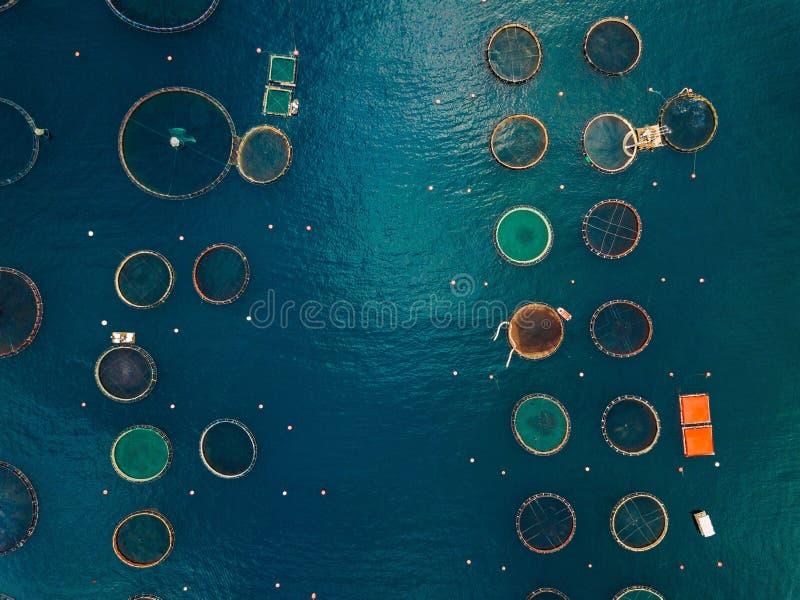有浮动笼子的三文鱼渔场 鸟瞰图 库存图片