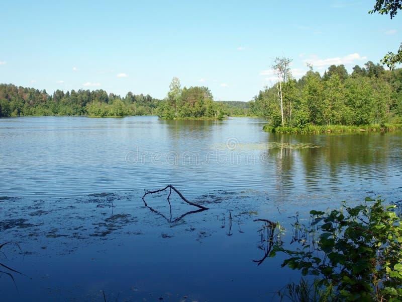 有海岛的Forest湖 免版税图库摄影