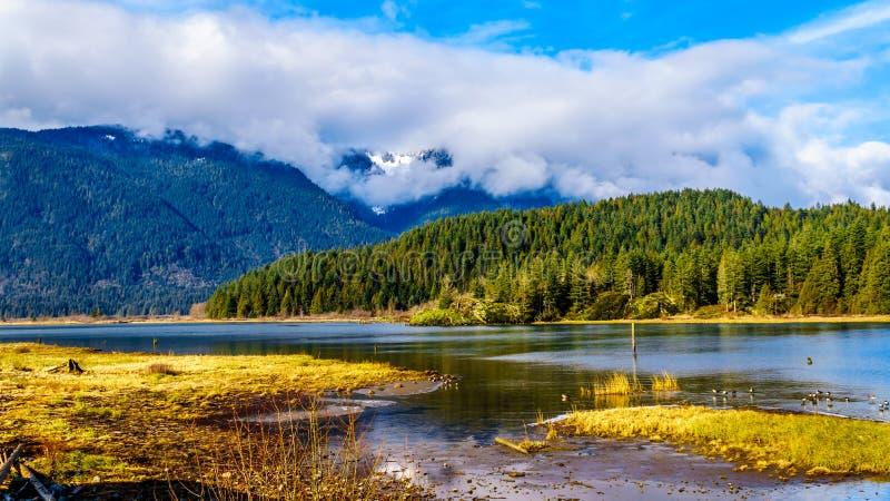 有海岸山脉的雪加盖的峰顶的Pitt湖在不列颠哥伦比亚省费沙尔谷的  图库摄影