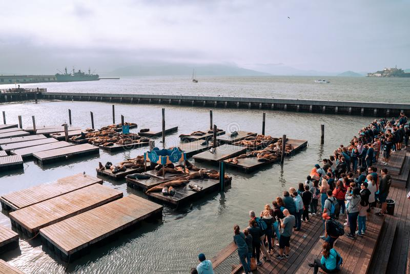 有海狮的著名码头39在旧金山,美国 恶魔岛视图 图库摄影
