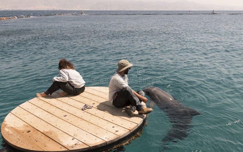 有海豚的辅导员在以色列市埃拉特附近 免版税库存照片