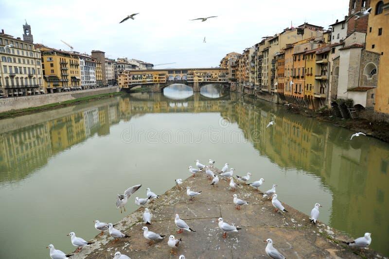 有海鸥和著名老桥梁的,意大利佛罗伦萨市 免版税库存图片