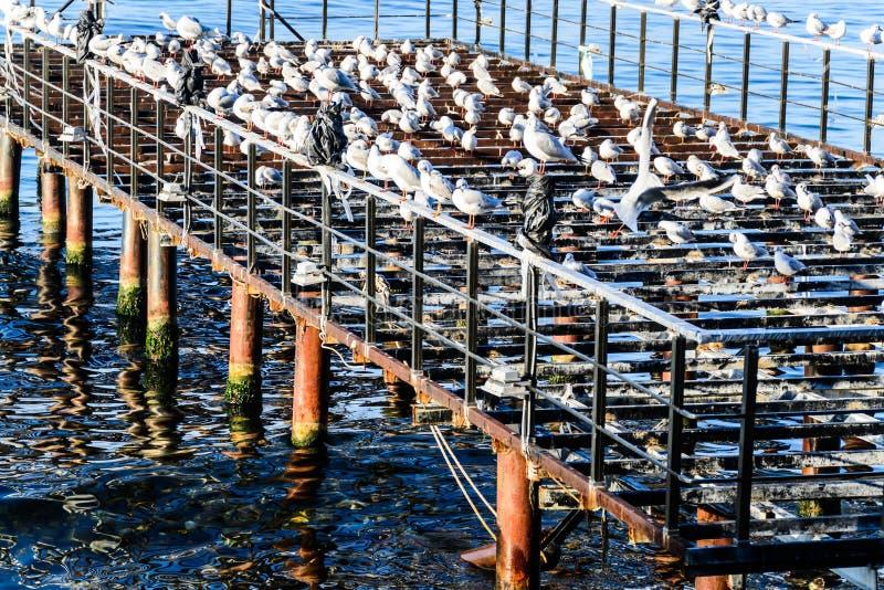 有海鸥和风平浪静的使荒凉的船坞 图库摄影