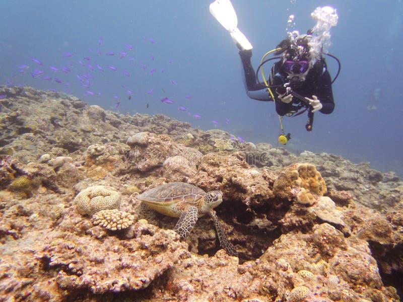 有海龟的一名轻潜水员 免版税库存图片