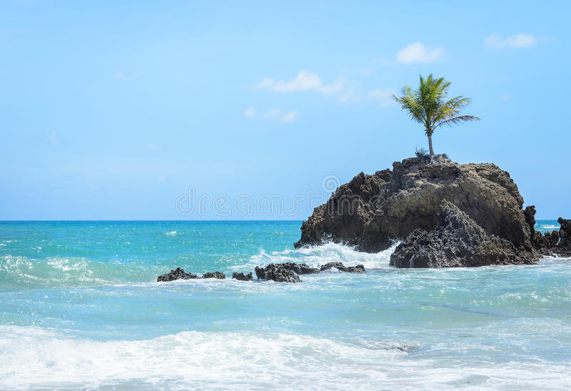 有海水围拢的一棵唯一椰子树的微型海岛和在一处天堂风景的一些岩层,非常美好 免版税图库摄影