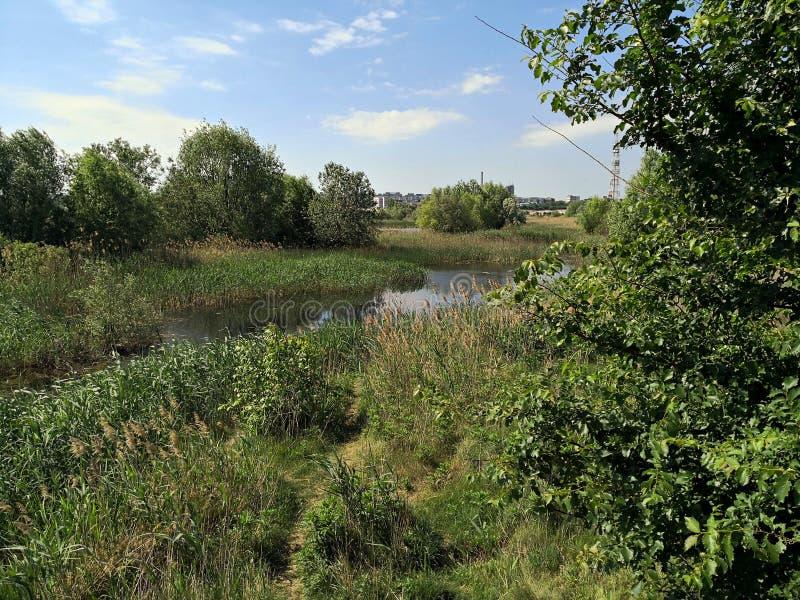 有湖生态系的城市郊区 图库摄影