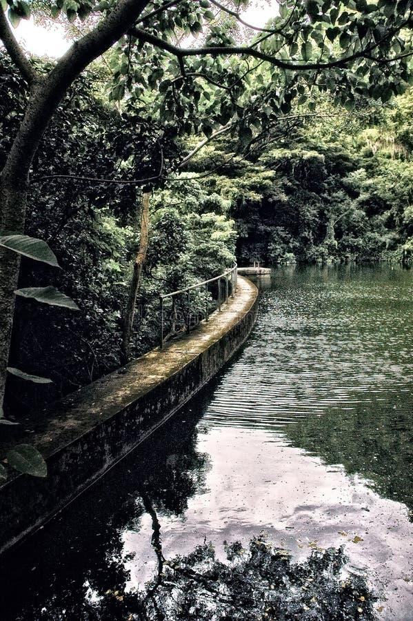 有湖Creque水坝的雨林在圣克鲁瓦美国维尔京群岛 免版税库存照片