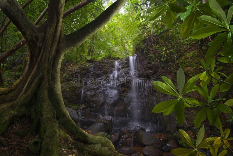 有瀑布的东南亚密林 库存图片