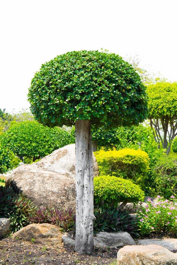 有灌木的假山花园庭院装饰的, 库存照片