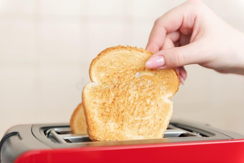 有烤面包片的红色多士炉早餐里面的 手女孩拔出准备好多士 库存图片